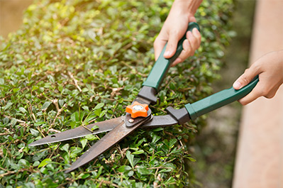 In-home-services-cutting_hedge